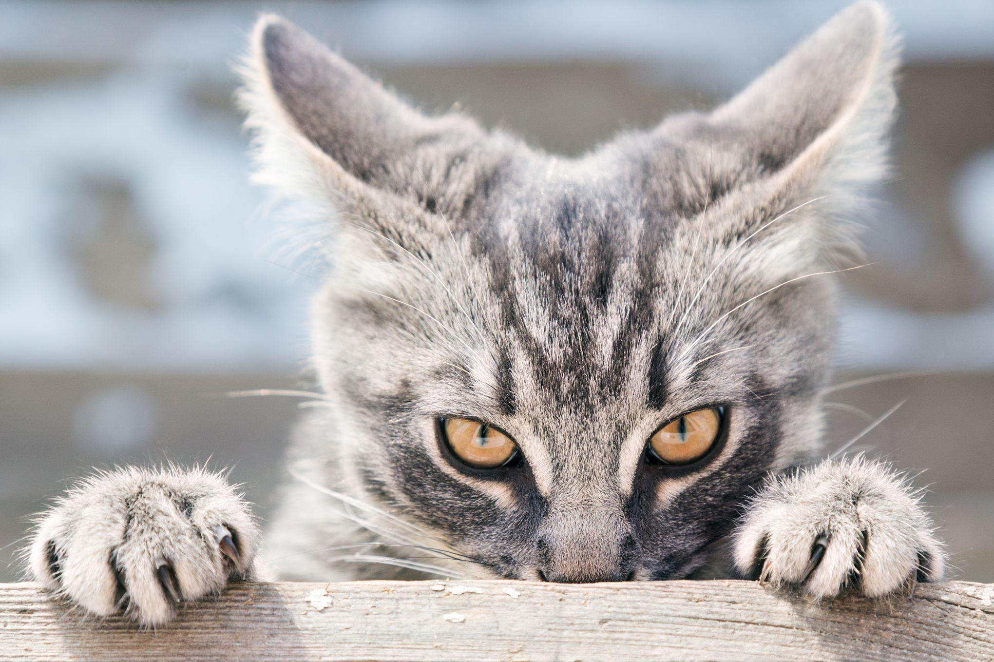 jeune chatte noire fraîche