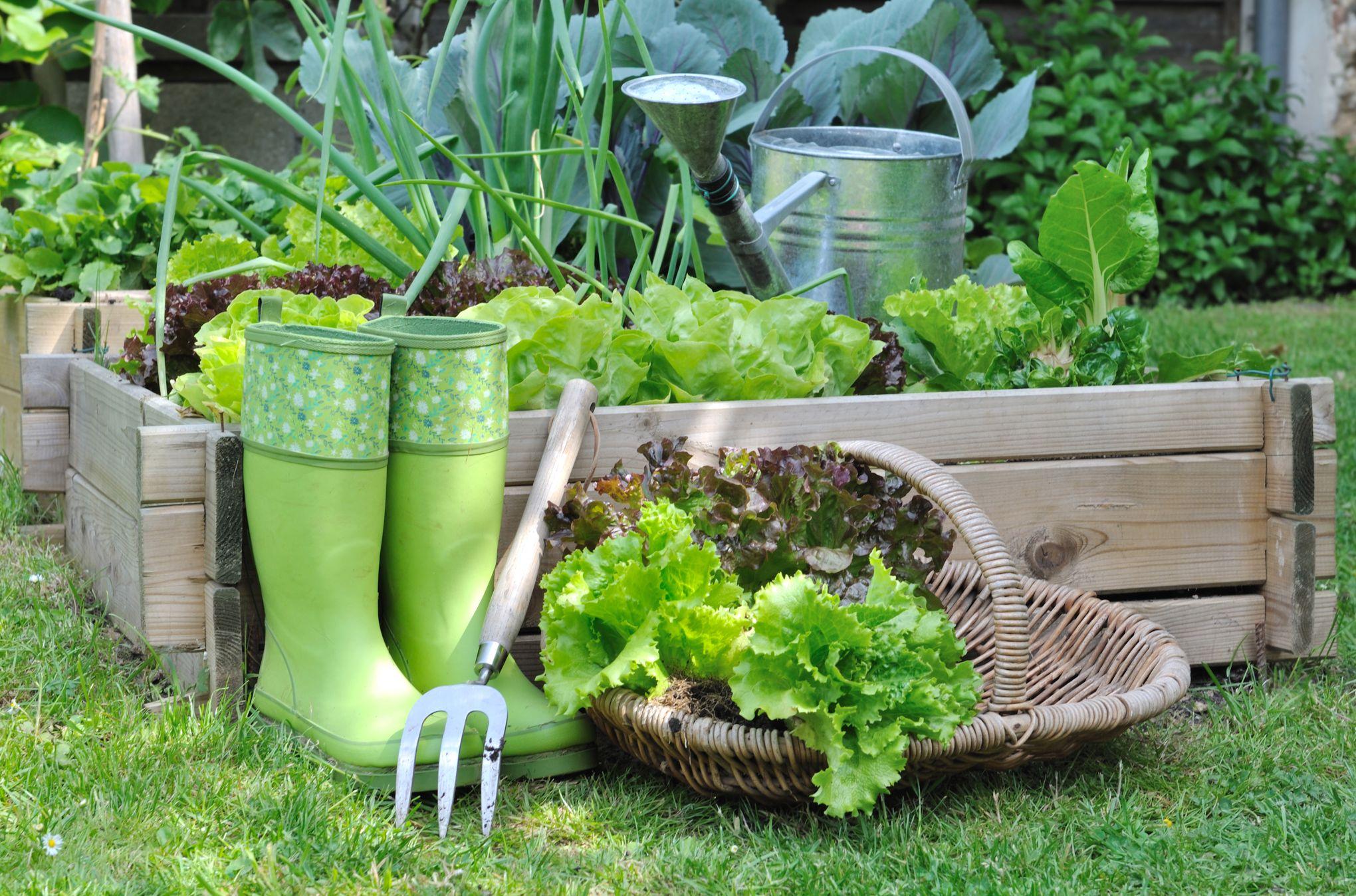 Quelle Salade Planter Maintenant par ici la bonne salade !