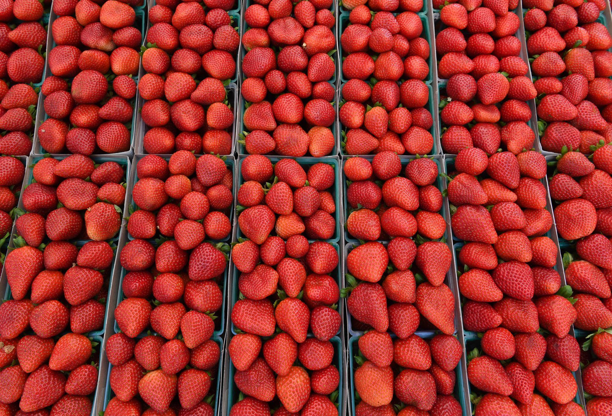 Des aiguilles à coudre retrouvées dans des fraises en Australie
