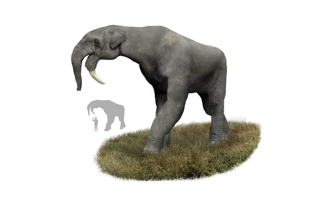 L'homme n'est pas responsable de la disparition des premiers grands mammifères