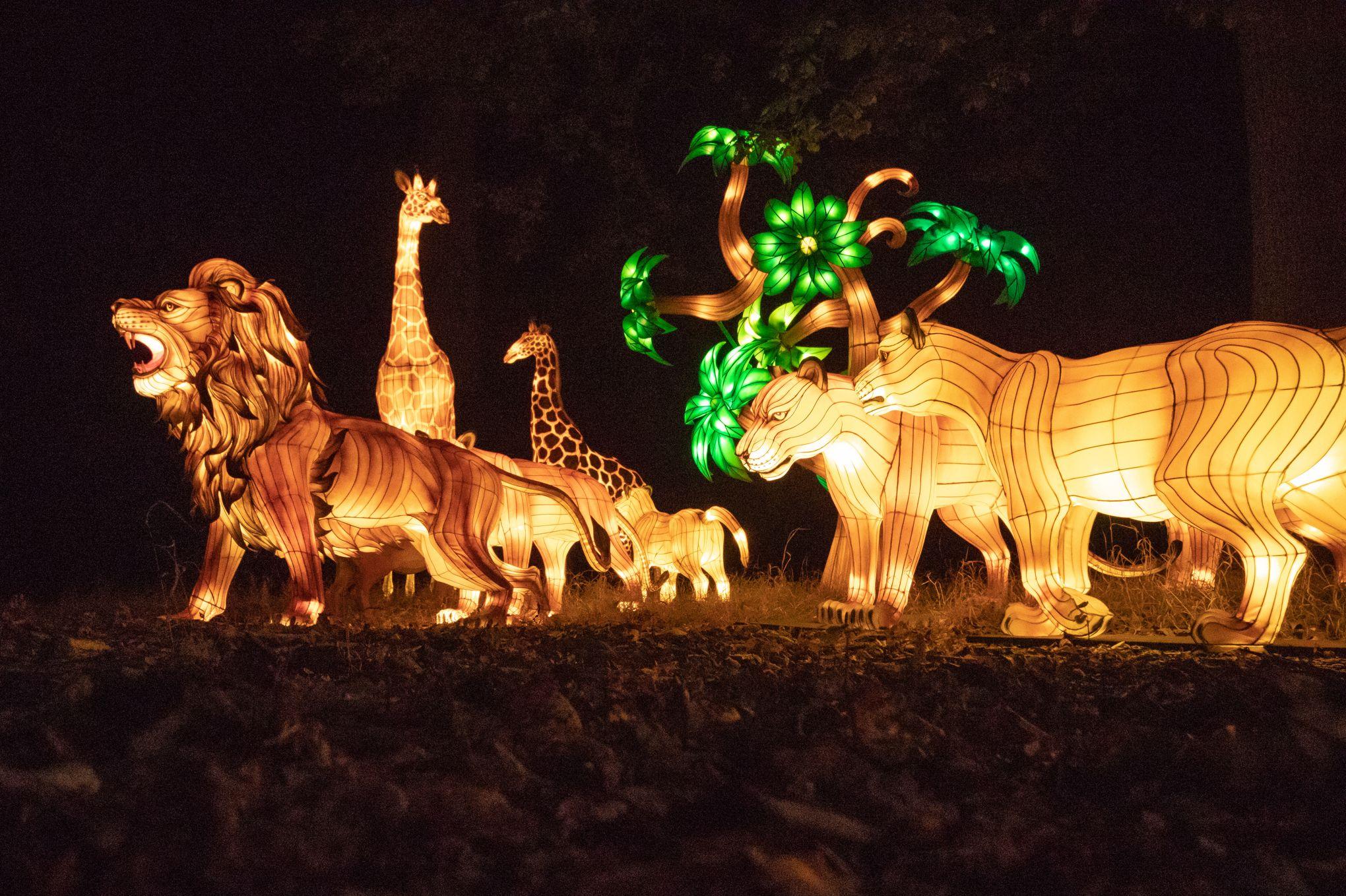 Un Festival De Lanternes Geantes Illumine Thoiry Et Ses Animaux