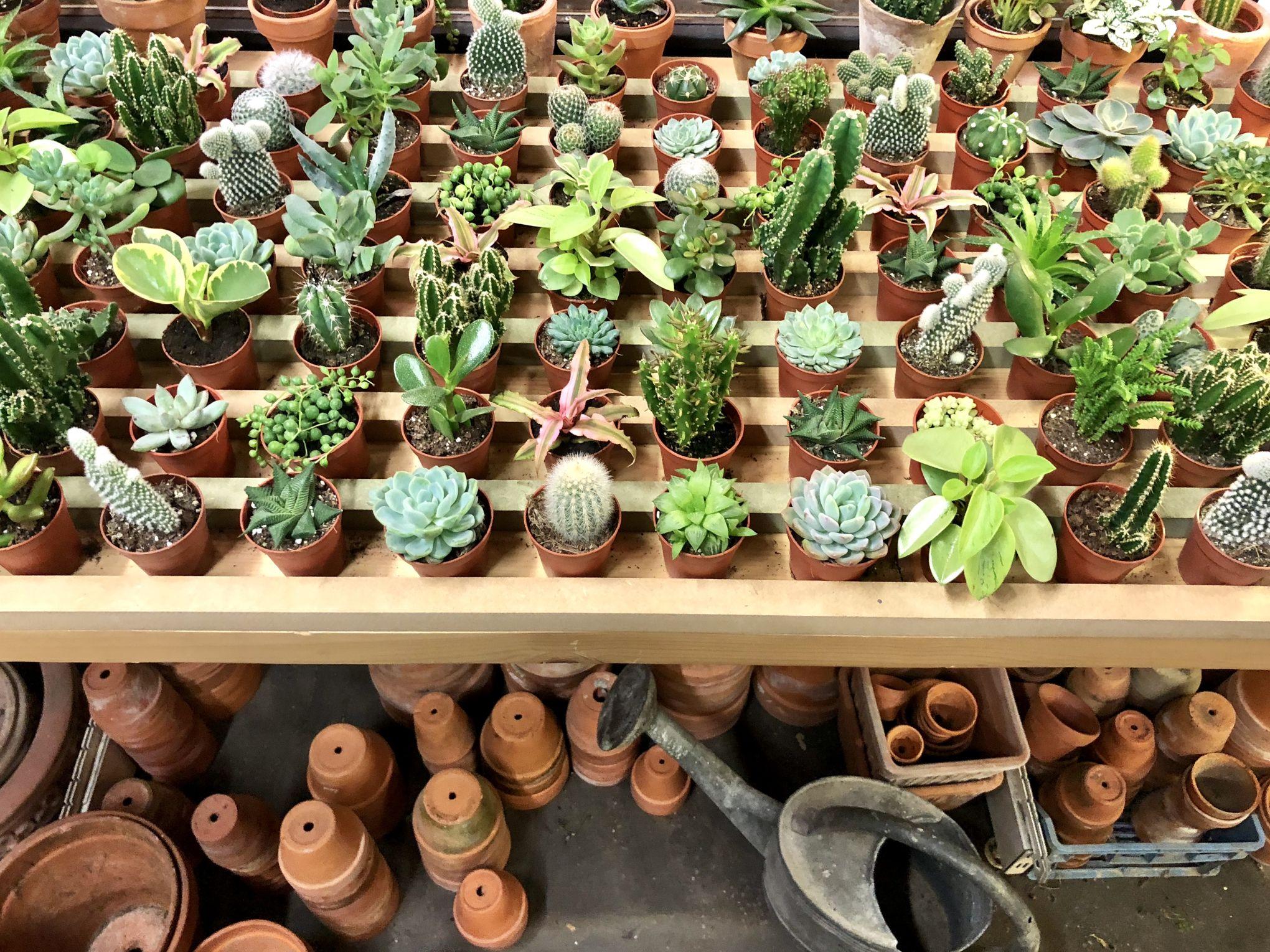 Pot De Plante Pas Cher une boutique de plantes à prix mini ouvre à paris