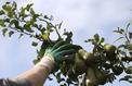 Embargo russe : les agriculteurs français réclament encore des aides