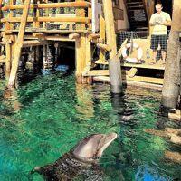 Le Dolphin Reef abrite une famille de huit dauphins, étudiés par des scientifiques du monde entier.