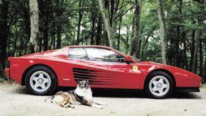 La Ferrari Testarossa d'Alain Delon. Shalva, son chien, ne sera pas livré avec la voiture!