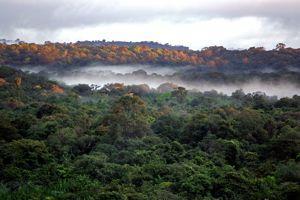 La forêt guyanaise prise dans les environs du village de Saül. <i>(Crédits: JODY AMIET / AFP)</i>