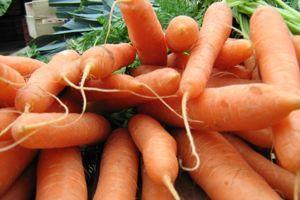 Dans les régions à hiver doux, les carottes peuvent passer l'hiver en pleine terre.