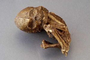 Le corps pétrifié d'un «bébé de pierre».