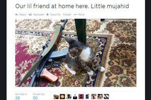 Des chats et une kalachnikov sur un compte de djihadiste.