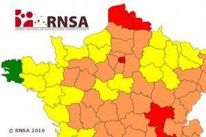 Consulter la carte d'aérovigilance détaillée par type de pollen et par département.