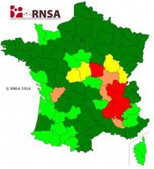 Consultez la carte de vigilance des pollens de la semaine directement sur Le Figaro Santé.
