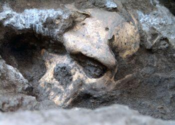 En 2005, un crâne découvert à Dmanisi.
