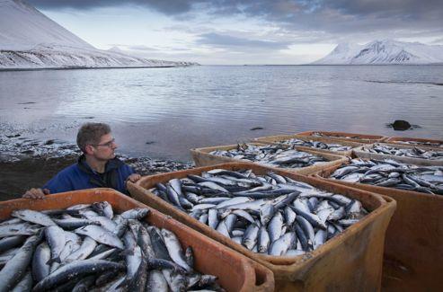 Ecoliers et volontaires ont aidé à nettoyer le fjord.