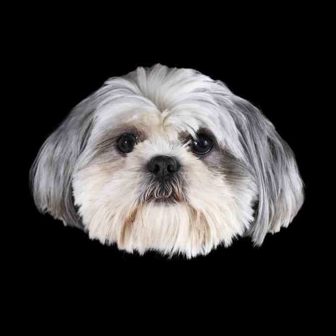Uma, le chien d'Isabelle Adjani