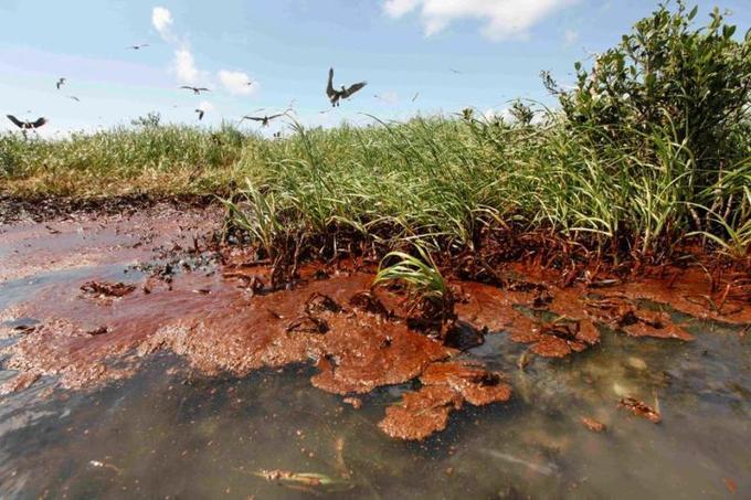 Le 20 avril 2010, la plate-forme pétrolière Deepwater Horizon explose et sombre dans le Golfe du Mexique, faisant 11 morts. Autre conséquence de cette catastrophe: le déversement en trois mois de plus de quatre millions de barils de pétrole dans les eaux du Golfe. Une catastrophe qui a largement impacté les côtes de Louisiane, comme ici dans la baie Barataria, le 22 mai 2010.