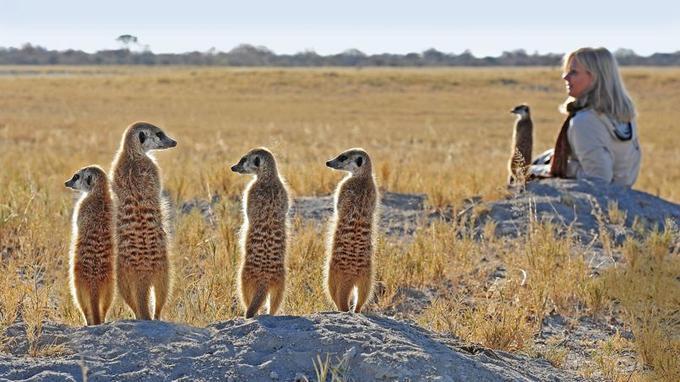 L'approche des suricates, une expérience inoubliable!