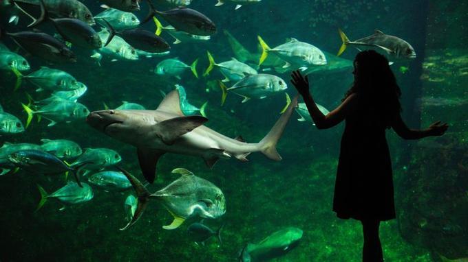 Face aux requins, devant l'un des 36 aquariums de Nausicaa.