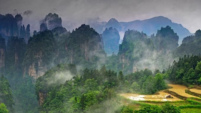 Pics karstiques, forêt subtropicale, rizières suspendues dessinent un paysage unique au monde. Le parc de Zhangjiajie n'a pas encore livré tous ses secrets.