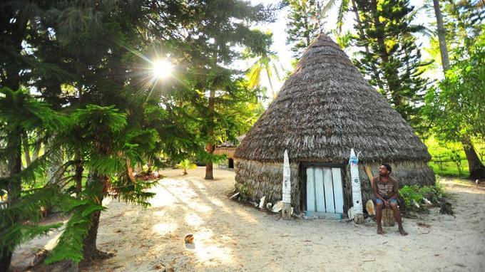 L'araucaria est surtout utilisé pour la construction des pirogues et des cases. L'île abrite encore une scierie et une distillerie de santal.