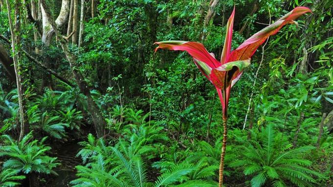 Exploitée au XIXe pour son bois de santal, l'île prend toutes les mesures pour préserver la beauté de ses sites naturels.