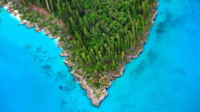 Le V victorieux d'une forêt primaire qui, de ses 60 mètres de hauteur, tient tête à un lagon classé au patrimoine mondial de l'Unesco.