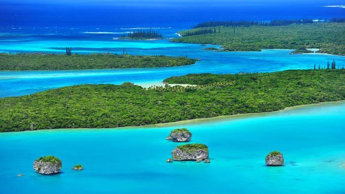 Sur les 19 espèces de pins colonnaires, les deux tiers se trouvent seulement en Nouvelle-Calédonie. Ils se dressent notamment dans la baie d'Upi, où les piroguiers naviguent entre les rochers coralliens.