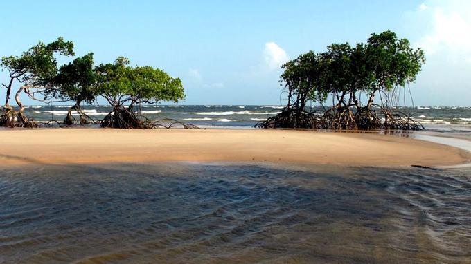 La mangrove recouvre une grande partie de l'île. (Crédit: Phogel/Flickr/CC)