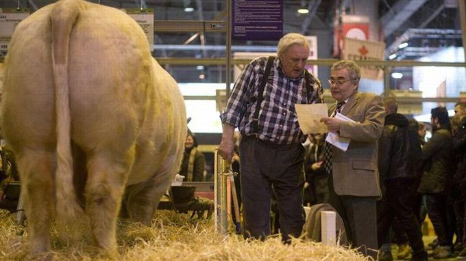 Cheveux blancs, chemise à carreaux, salopette, Gérard Depardieu s'est fondu dans le décor, dimanche, au salon de l'agriculture.