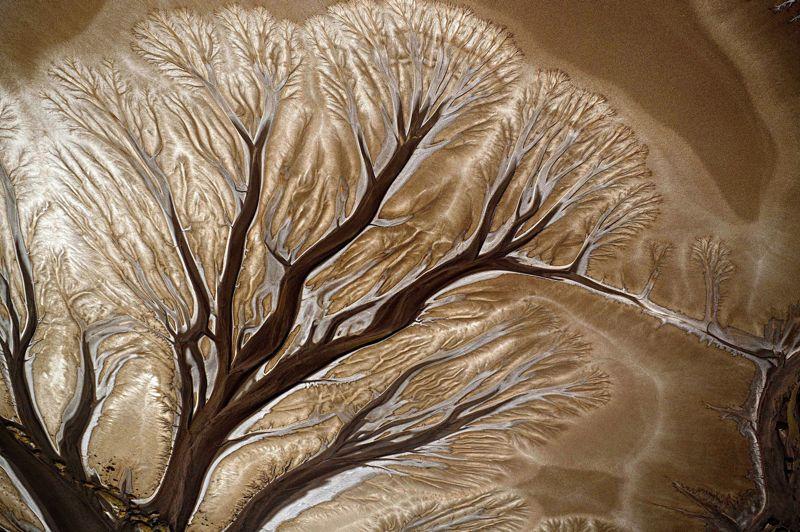 <b>De branche en branche</b>. Comme les rameaux d'un immense arbre pétrifié, les innombrables bras d'un des affluents du fleuve Daintree, dans le nord-ouest de l'Australie, ont lentement creusé leur lit dans le limon pour mieux se jeter dans l'océan. Année après année, de nouvelles ramifications sont apparues, poussées par les crues du fleuve et le courant, puis elles se sont sédimentées dans un sable épais mêlé d'argile au bord du Pacifique. Un paysage unique au monde capturé depuis le ciel, en hélicoptère, par le photographe Australien Ted Grambeau, connu surtout pour ses images aquatiques et ses photos de surf. De l'aveu même de l'artiste, deux mois auront été nécessaires pour réaliser ce cliché dans les plus belles conditions de lumière possibles.