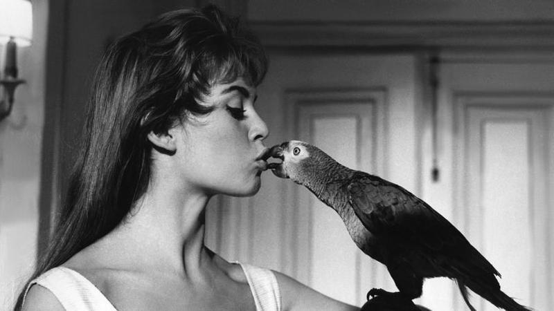 Brigitte Bardot 10 Photos Cultes De Sa Vie D Actrice