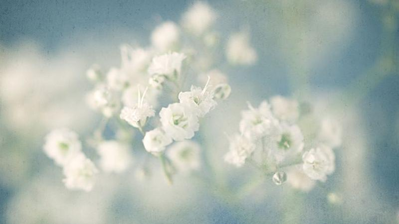 Graines D Amour Semez Les Fleurs De Votre Mariage