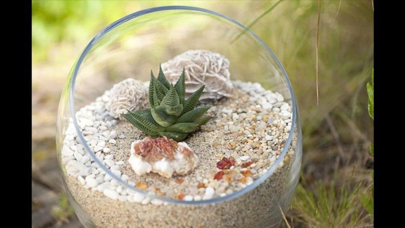 Terrarium L Art De Cultiver Son Jardin Interieur