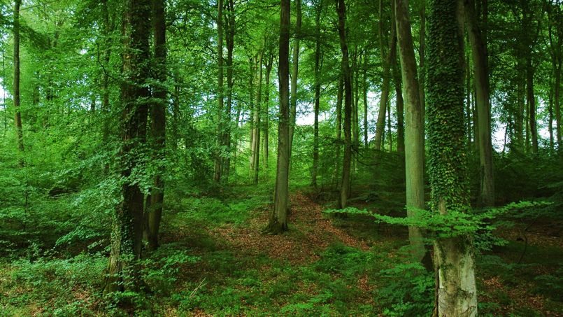 une nouvelle assurance pour les forêts privées