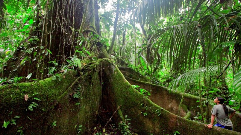 Superbe Forêt amazonienne : le grand inventaire #OU_29