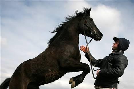 l a lansade lit l 39 avenir des jeunes chevaux. Black Bedroom Furniture Sets. Home Design Ideas