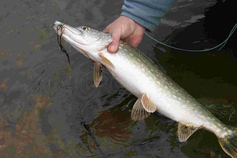 Globalement, les poissons marins sont moins contaminés en méthylmercure que les poissons de rivière. <BR/>