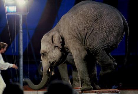 Stop à l'utilisation de TOUS les animaux dans les cirques (UK) !!
