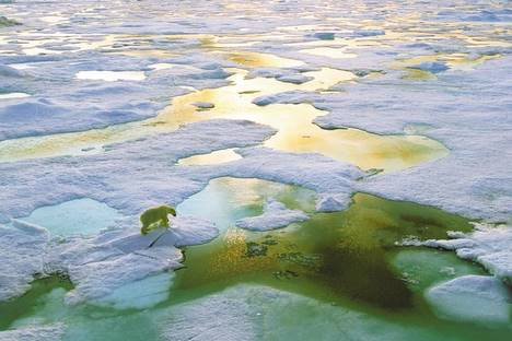 Une banquise arctique réduite cet hiver