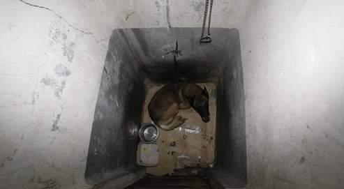 Un molosse enfermé dans d'anciennes toilettes d'un mètre carré, dans le noir complet, dans un squat de Saint-Denis.