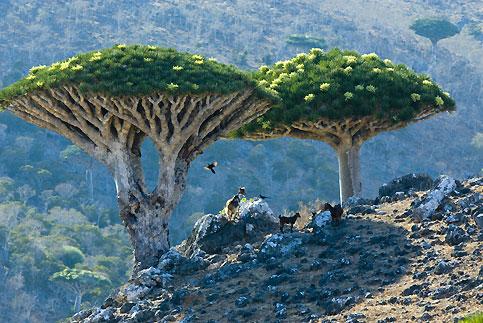 هل تعرف ما هي شجرة دم الأخوين؟ 20071221PHOWWW00201