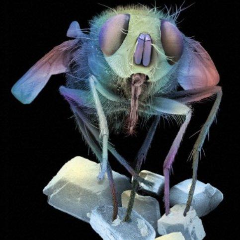 Une mouche pos�e sur des cristaux de sucre.