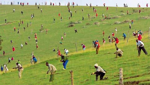 Aussi incroyable que cela paraisse, ces hommes sont des guerriers kényans, et ce qu'ils tiennent, ce sont des arcs et des flèches, comme au temps de la chasse aux lions. Massaïs ou Kalenjins, ils s'entretuent sur cette colline depuis janvier, en respectant des règles extraordinairement strictes : jamais la nuit, ni au corps à corps, ni tous les jours, ni pour blesser (on vise pour tuer ; déjà 20 morts). Suite aux dernières élections, les Massaïs (1% de la population kényane) veulent en effet récupérer les pâtures qu'occupent les Kalenjins (10 fois plus nombreux). Mais les jours où ils ne s'affrontent pas, ils continuent à vivre côte à côte comme si de rien n'était !
