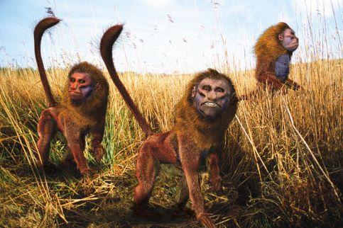 Dans 5 millions d'années, la jungle amazonienne pourrait bien être une savane. Les singes grimpeurs descendraient alors des arbres pour donner naissance à ces Baboukari, qui utilisent leurs queues pour communiquer.