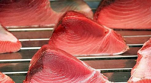 Greenpeace veut exhorter les commerçants à ne plus vendre de thon rouge