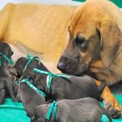 Le business des clones d'animaux domestiques est lancé 7f62f7bc-63b8-11dd-b4b0-aee0a120d96f