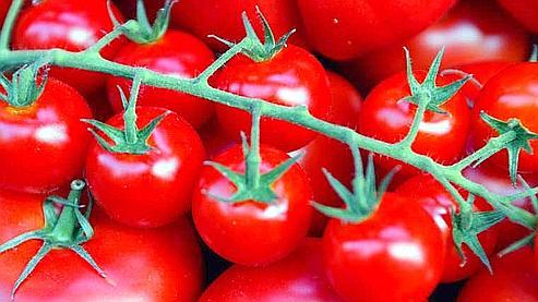 La même tomate se vend 1.29 euro dans les Cotes d'Armor et 3.3 euros dans la Marne, selon l'étude de Familles rurales. (Photo Alain Aubert/ Le Figaro)