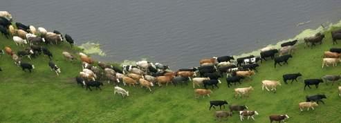 Pourquoi les vaches ne perdent-elles pas le nord ?<br/>