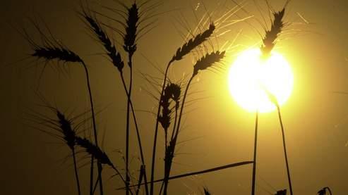 OGM : les obligations de la Commission européenne modifiées