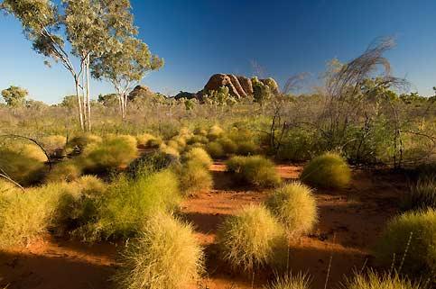 Quand le soleil couchant joue dans les touffes de spinifex, dont les tiges coupantes interdirent pendant longtemps l'accès de la brousse australienne.