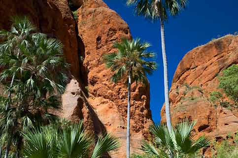 Le rouge des falaises d'Echidna Chasm et le vert des palmes du «Livistona» sur fond de ciel marine.